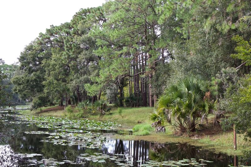 Pond at John Chesnut park stock photography