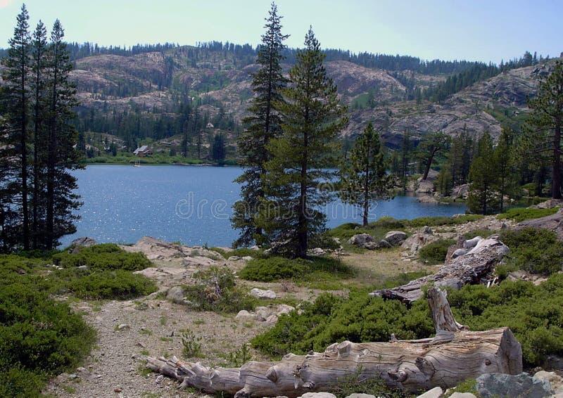Lake with log royalty free stock image