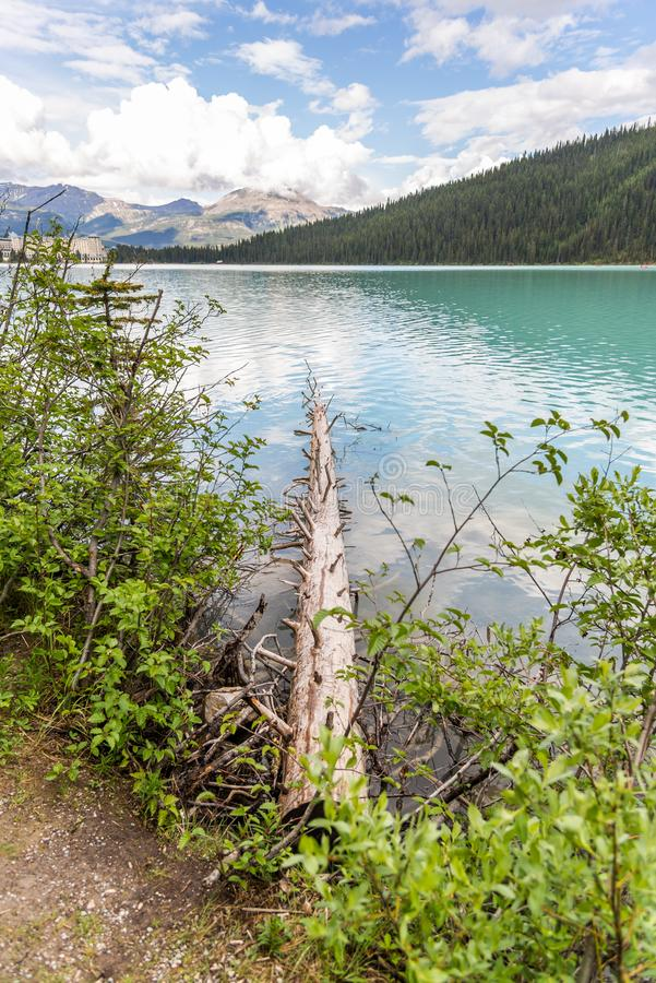 Lake Louise pristine environment is a must see for tourists. royalty free stock images