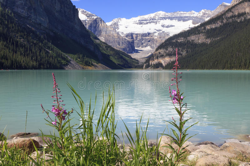 Lake Louise. In Rocky mountain Canada royalty free stock image