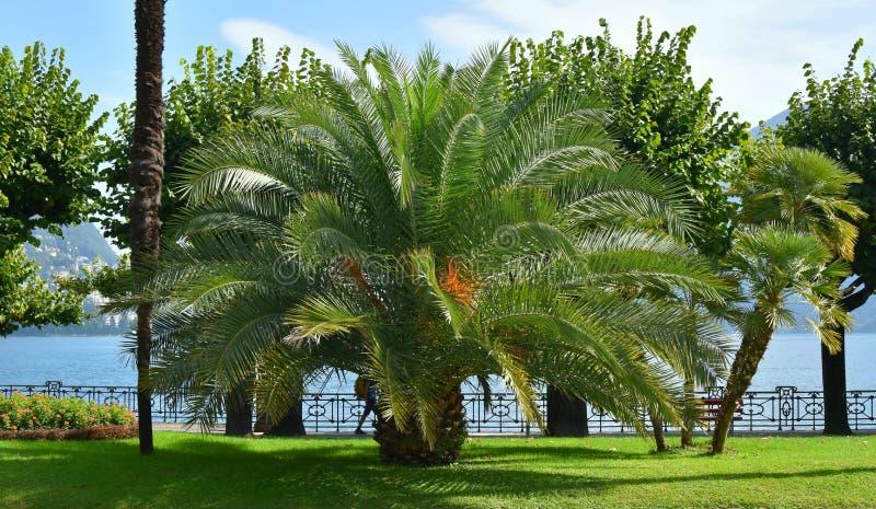 Lake Lugano in the spring. Switzerland. Europe. Palms on the shore. royalty free stock image