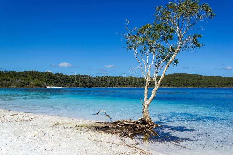 Lake Mackenzie on Fraser Island off the Sunshine of Queensland is a beautiful freshwater lake popular with tourists who visit royalty free stock photography