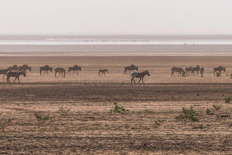 Lake Manyara National Park royalty free stock photo