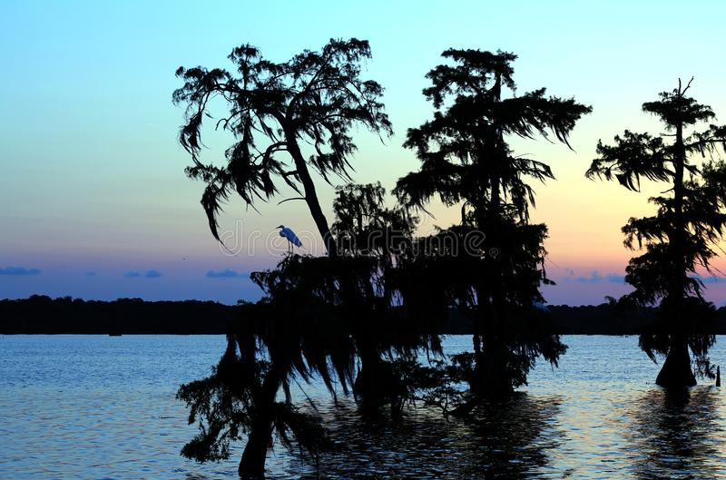 Lake Martin Sunset in Southern Louisiana. Sun has set and egret perched in one of the cypress trees. Multicolored Sky stock photos