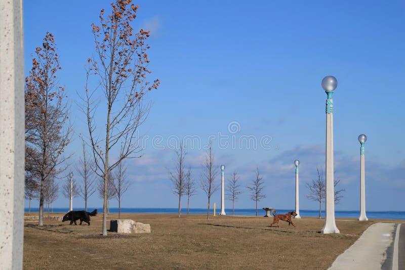 Lake Michigan shoreline med stenblockhundkapplöpning som in spelar, parkerar royaltyfri foto