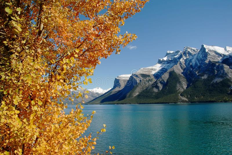 Lake Minnewanka in autumn,Canadian Rockies,Canada. Lake Minnewanka and yellow leaves in autumn,Canadian Rockies (inscribed on the UNESCO World Heritage list) royalty free stock images