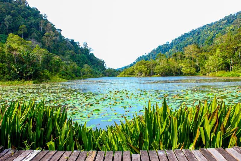 The lake among mountains stock images