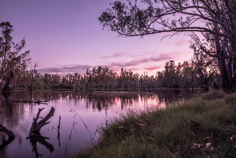 Trees in Lake Mulwala Australia. Lake Mulwala was formed by damming the Murray and flooding the adjacent countryside. Flooded trees have subsequently died stock photography