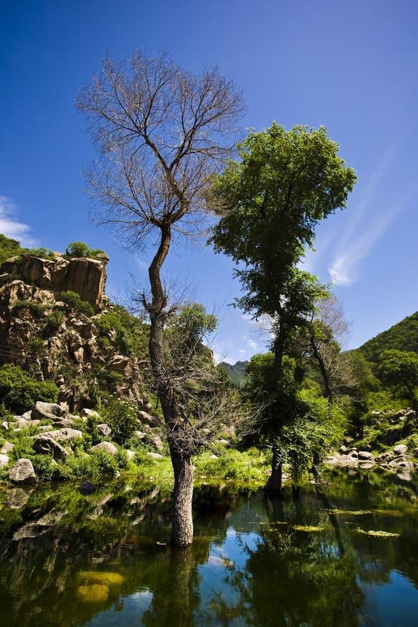 lake nära trees två arkivbilder