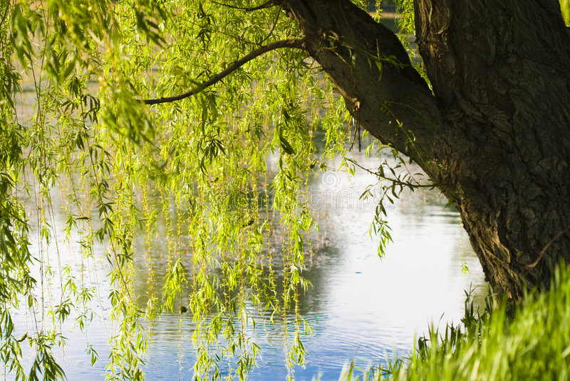 Lake and nature royalty free stock photo