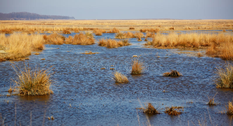 Lake nearby Vadu in Danube Delta Reserve royalty free stock images