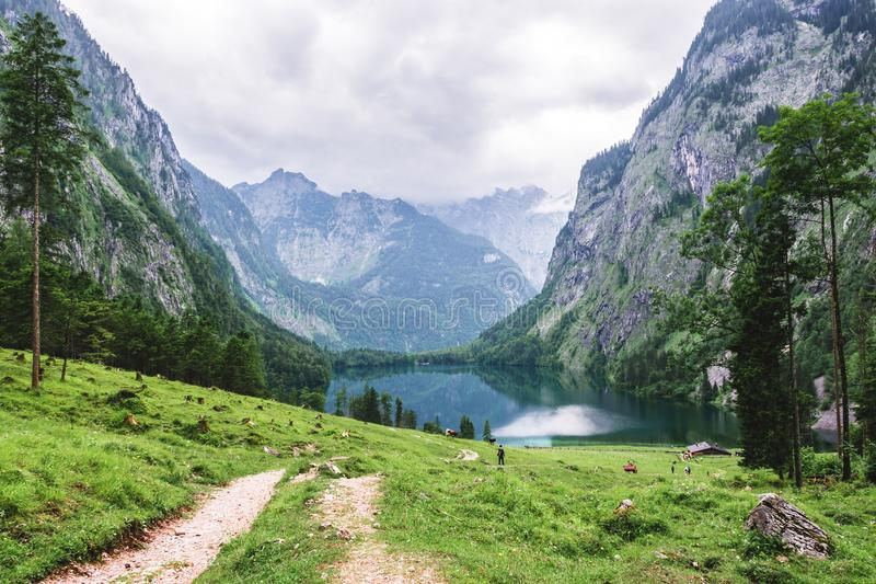 Lake Obersee, Sch nau am Konigssee, Bavaria, Germany. Great alpine scenery with cows in National Park Berchtesgaden. stock image
