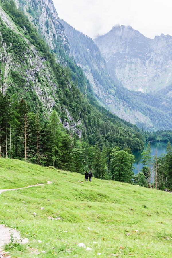 Lake Obersee, Sch nau am Konigssee, Bavaria, Germany. Great alpine scenery with cows in National Park Berchtesgaden. royalty free stock photos