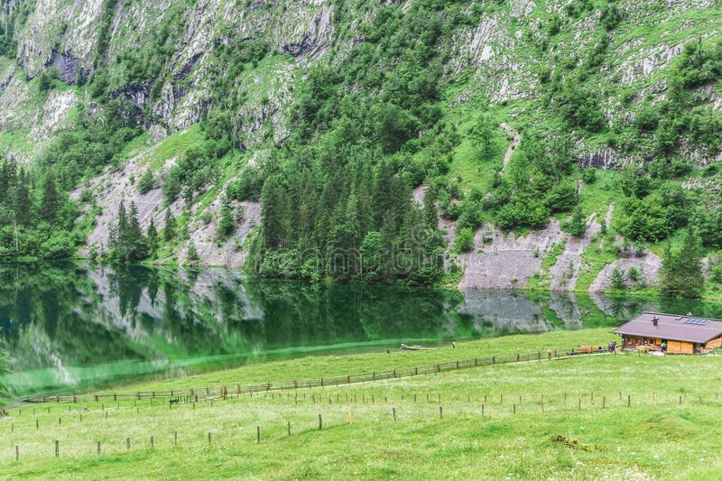 Lake Obersee, Sch nau am Konigssee, Bavaria, Germany. Great alpine scenery with cows in National Park Berchtesgaden. stock images
