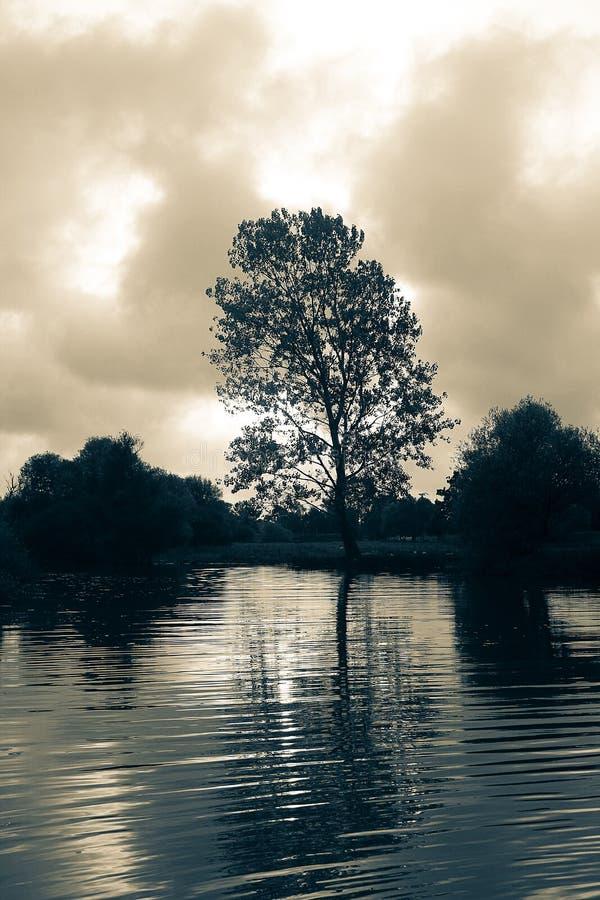 Lake och tree royaltyfri bild