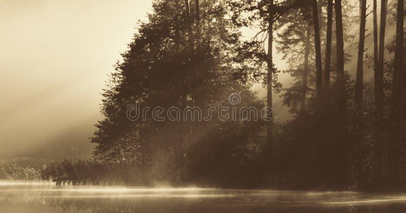 Lake på gryning royaltyfri bild
