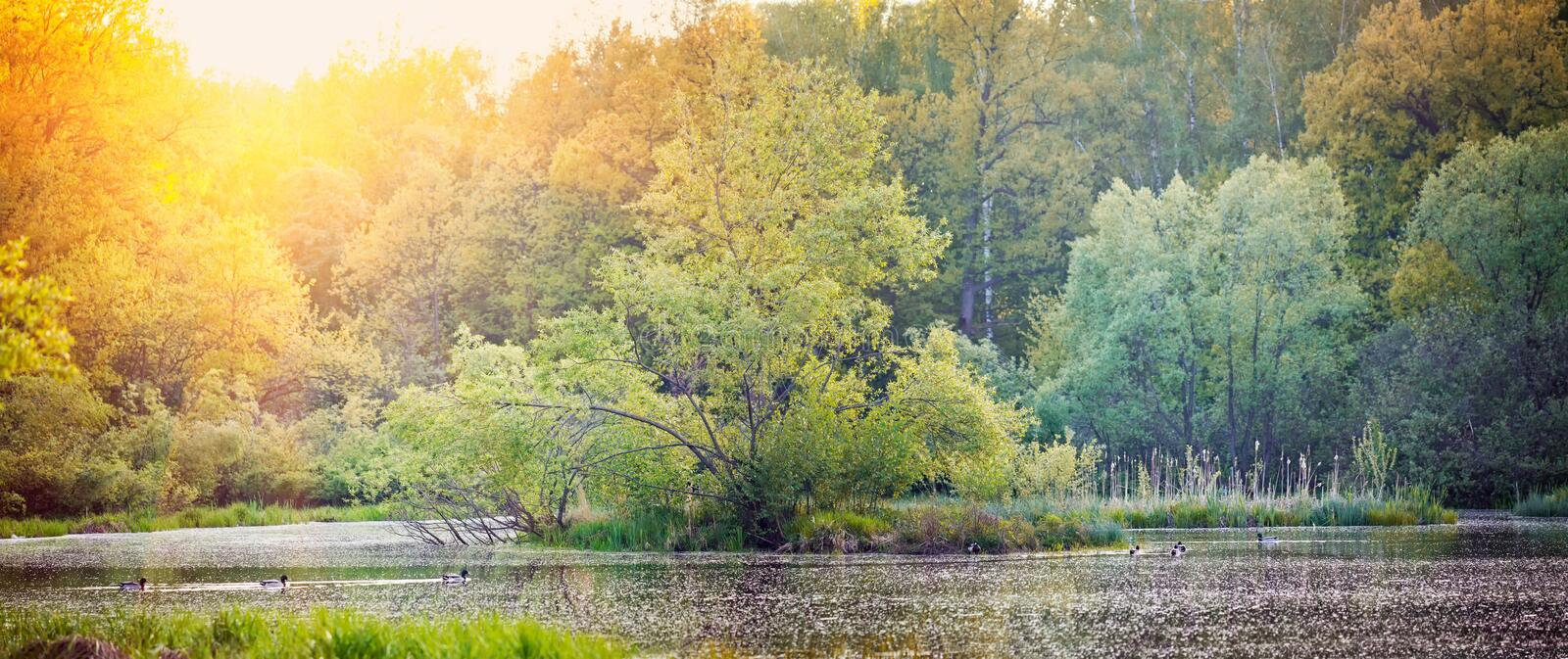 Lake in a park royalty free stock photography