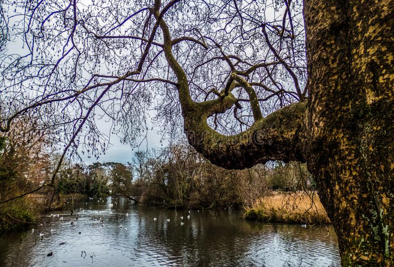 Lake in the park with birds,  Eastbourne, UK. Lake in the park with birds, Eastbourne, UK stock image