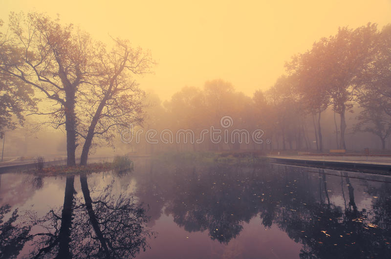 Lake in park in the misty morning. Lake in park int the misty morning stock image