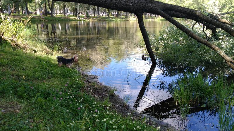 The lake in the Park. A small, beautiful, picturesque lake is located in the center of the Park in good weather stock photos