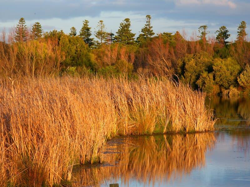 Download Lake Pertobe Warrnambool Australia Stock Photo - Image of pretty, reflection: 25637106