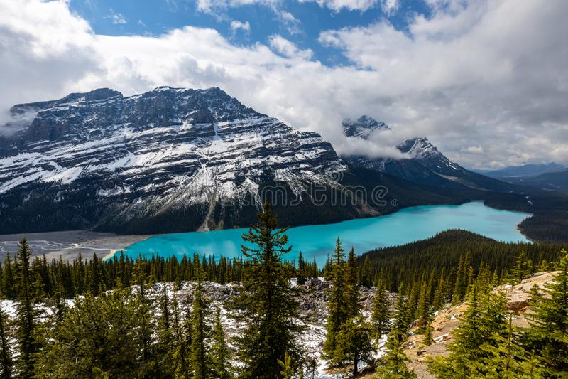 Lake Peyto in the Rocky Mountains  of Banff National Park in Canada royalty free stock photography