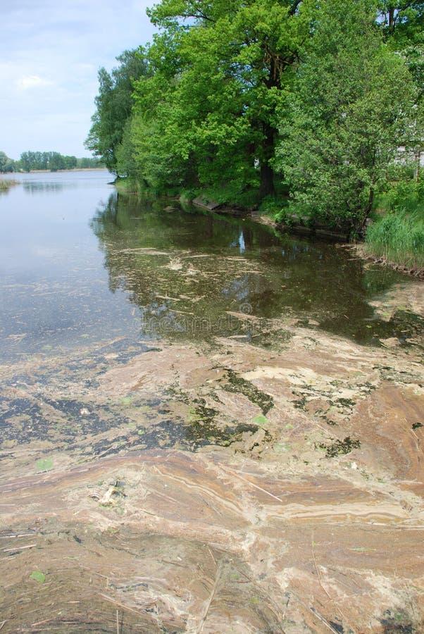 Free Lake Pollution Stock Photo - 14611530