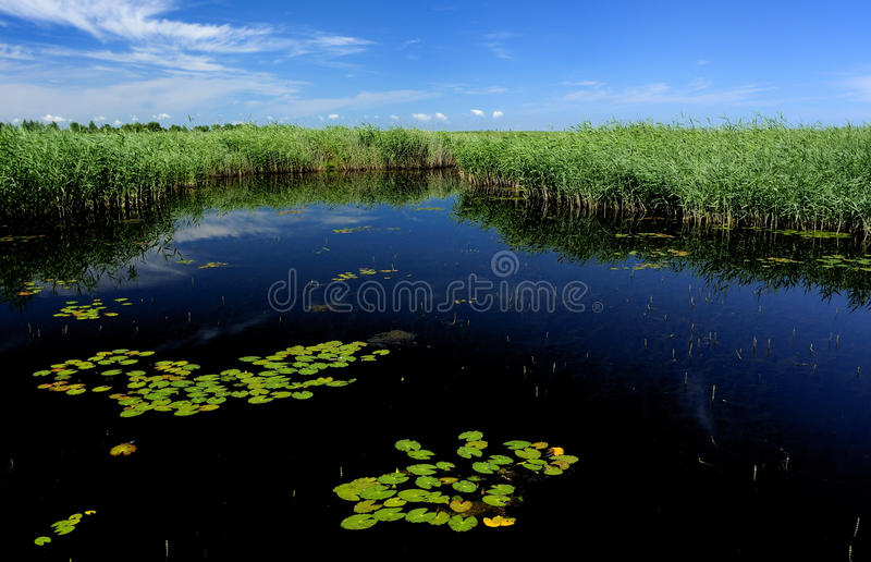 Lake, reeds, blue sky stock photography