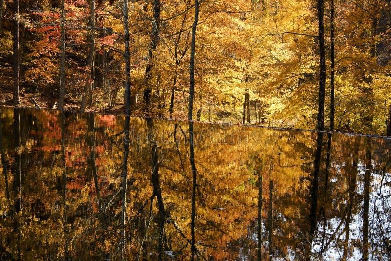 Download Lake Reflections stock image. Image of shore, serene, seasonal - 7186041
