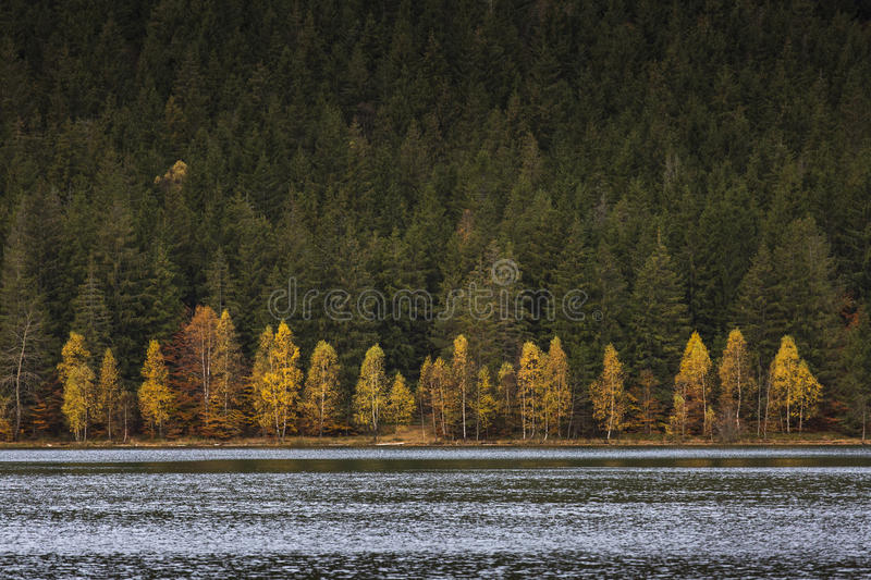 Lake reflections of fall foliage. Colorful autumn foliage casts stock image
