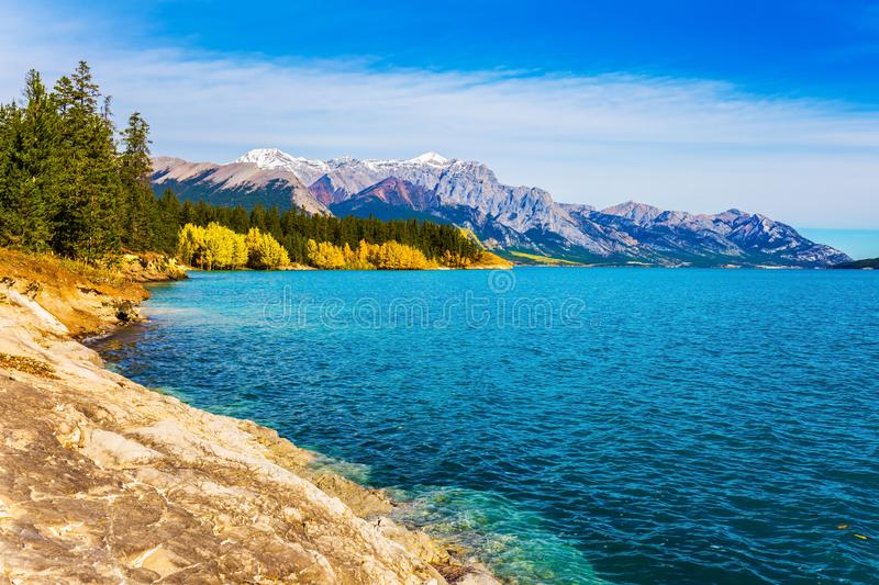 Lake reflects the golden foliage. Mountain valley in the Rocky Mountains of Canada. Artificial Abraham lake reflects the golden foliage of aspen and birches royalty free stock images