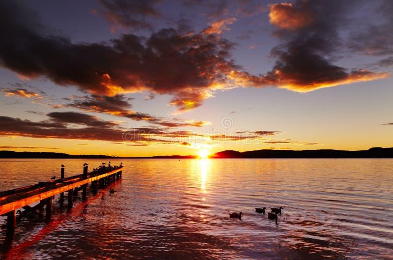 Lake Rotorua som är nyazeeländsk arkivfoto