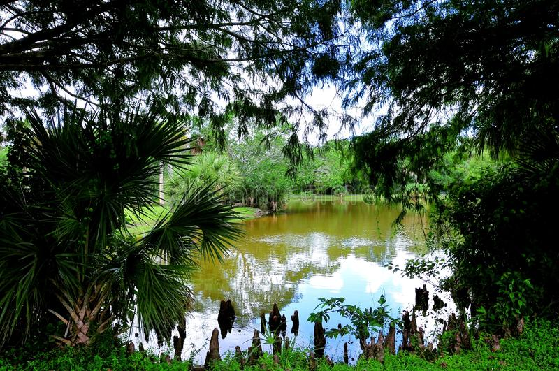 Lake in RV campground park. Lake, cypress knees and trees in a RV campground in a Broward County park, South Florida royalty free stock photography