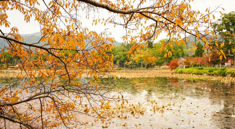 Lake scenery at autumn in Kyoto, Japan. Lake scenery at autumn in sunny day royalty free stock photo