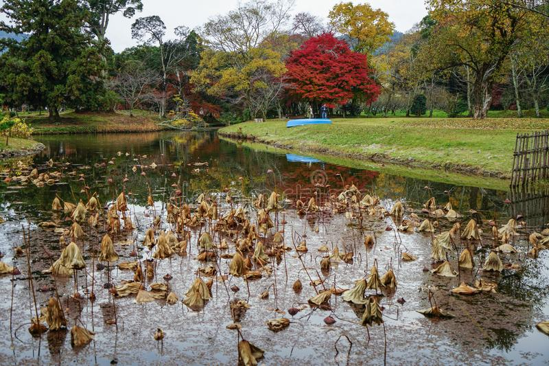 Lake scenery at autumn in Kyoto, Japan. Kyoto, Japan - Nov 21, 2016. Autumn park in Kyoto, Japan. Kyoto served as Japan capital and the emperor residence from royalty free stock photo