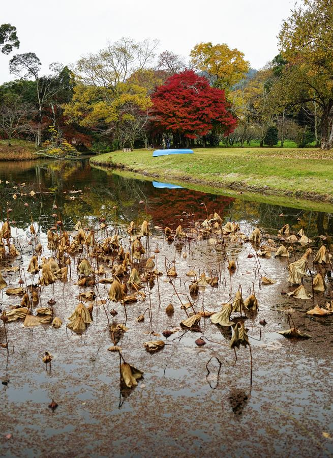 Lake scenery at autumn in Kyoto, Japan. Kyoto, Japan - Nov 21, 2016. Autumn park in Kyoto, Japan. Kyoto served as Japan capital and the emperor residence from stock photos
