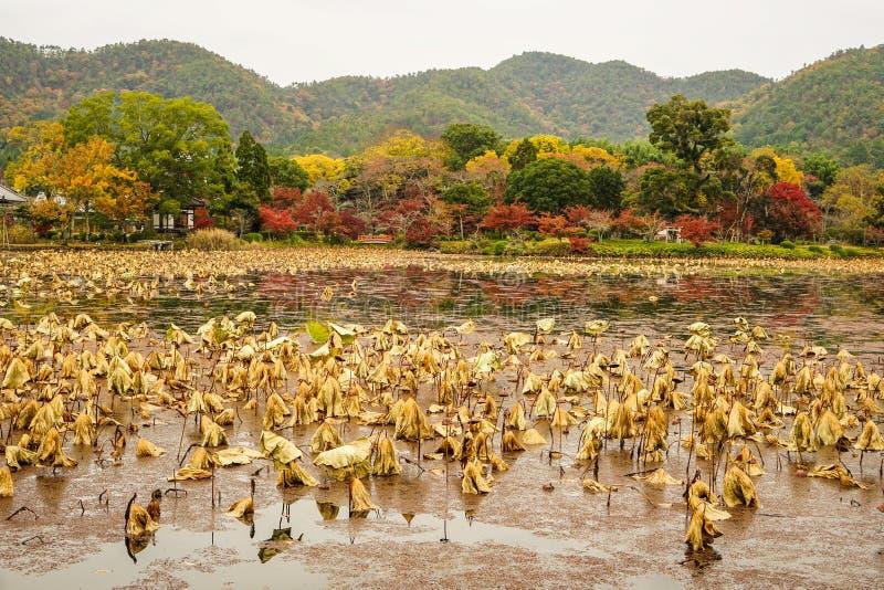 Lake scenery at autumn in Kyoto, Japan. Lake scenery with autumn trees in Kyoto, Japan stock image