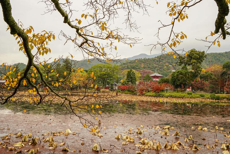 Lake scenery at autumn in Kyoto, Japan. Lake scenery with autumn trees in Kyoto, Japan stock photo