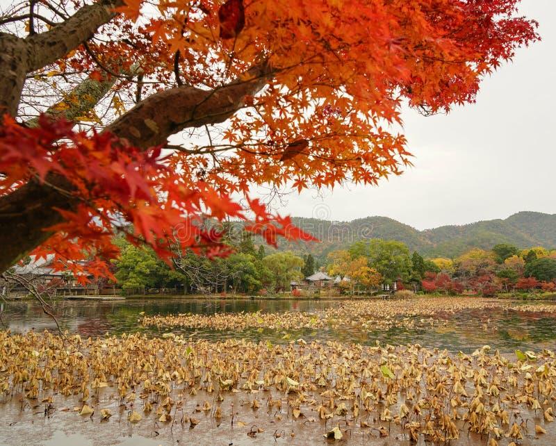 Lake scenery at autumn in Kyoto, Japan. Lake scenery with autumn trees in Kyoto, Japan royalty free stock images