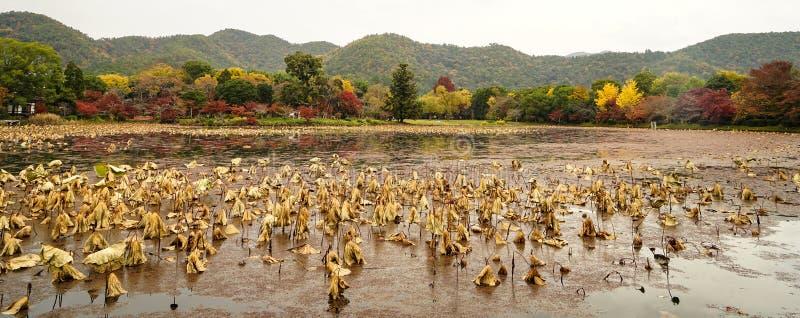 Lake scenery at autumn in Kyoto, Japan. Lake scenery with autumn trees in Kyoto, Japan royalty free stock photos