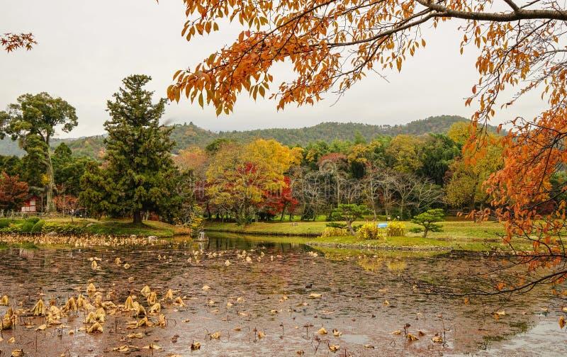 Lake scenery at autumn in Kyoto, Japan. Lake scenery with autumn trees in Kyoto, Japan stock photos