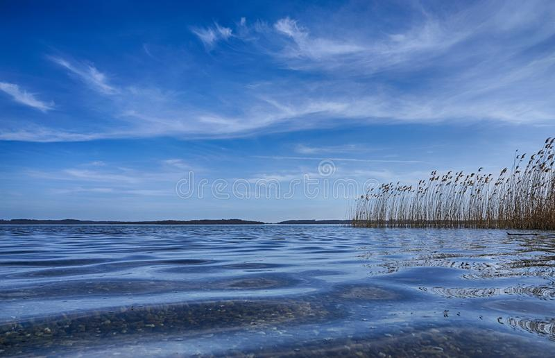 Lake Schwerin, Germany. Tree, water, summer, nature, landscape, mecklenburg, mecklenburg-vorpommern, reed-, sea, closeup, good, weather, lakes, photography royalty free stock photos