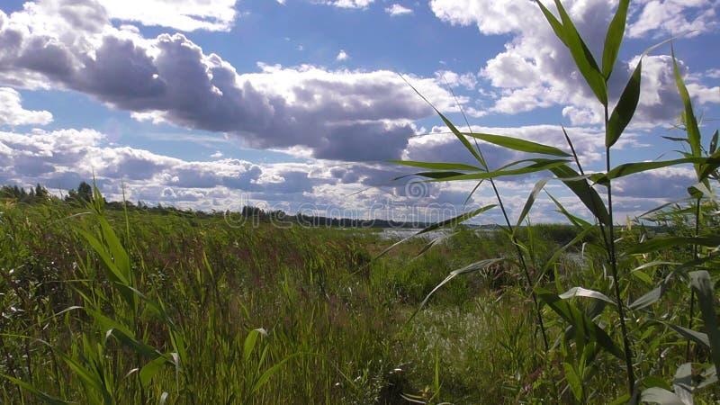 Lake Seliger arkivfoton