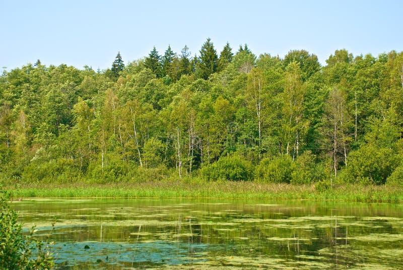 Download Lake shore stock image. Image of nature, europe, sightseeing - 21030899