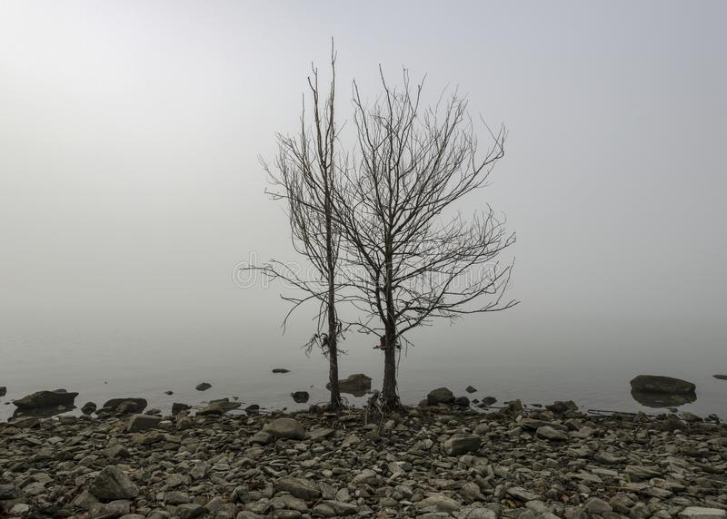 Lake shore trees in the fog royalty free stock images