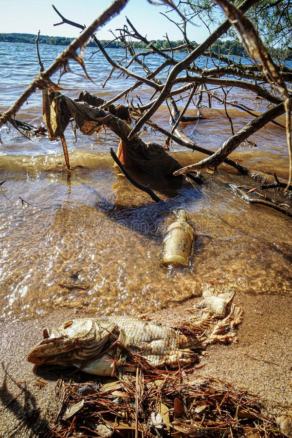 A Lake Shoreline is Littered with a Dead Fish and Garbage stock photo