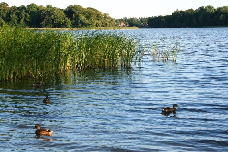 The lake of Soro in sealnd denmark. Landscape of Sor� lake in denmark, zealand royalty free stock photo