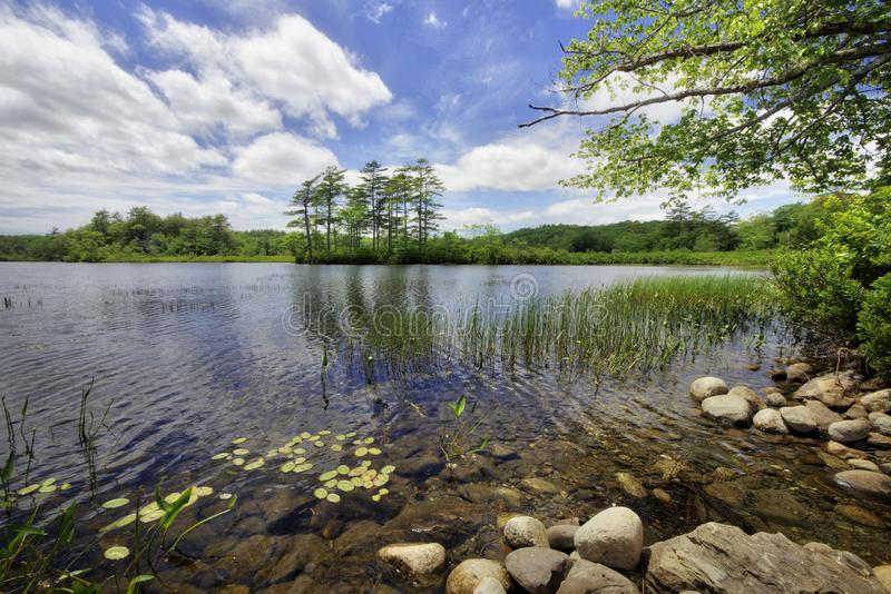 Summer lake in maine royalty free stock images
