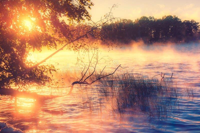 Lake at sunrise royalty free stock photo
