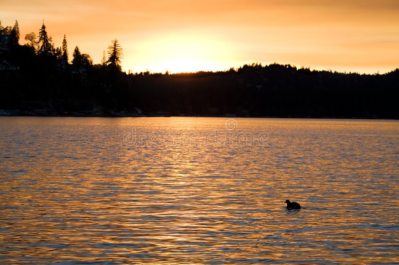 Lake Sunset 4. Sunset over Lake Arrowhead with a duck in silhouette stock photo